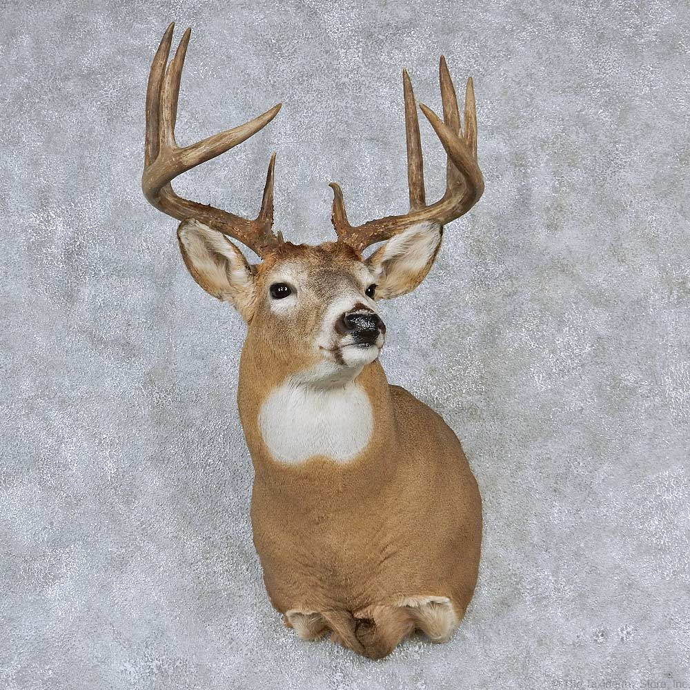 Whitetail Deer Mount For Sale 13160 The Taxidermy Store