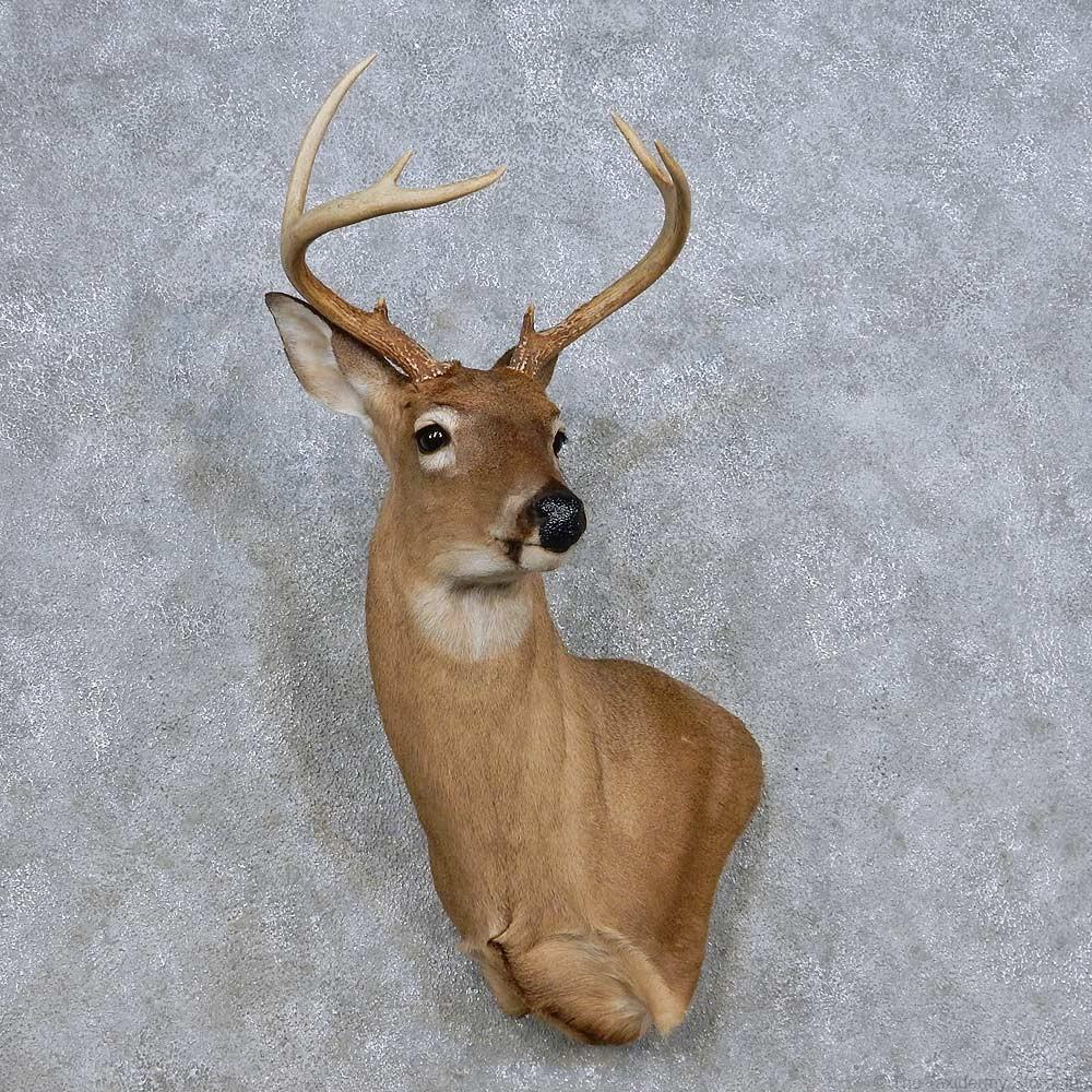 Deer Mount Wall Decor : Whitetail deer wall pedestal mount for sale the