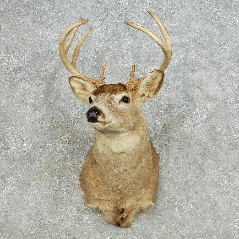 Whitetail Deer Shoulder Mount For Sale 14107 The