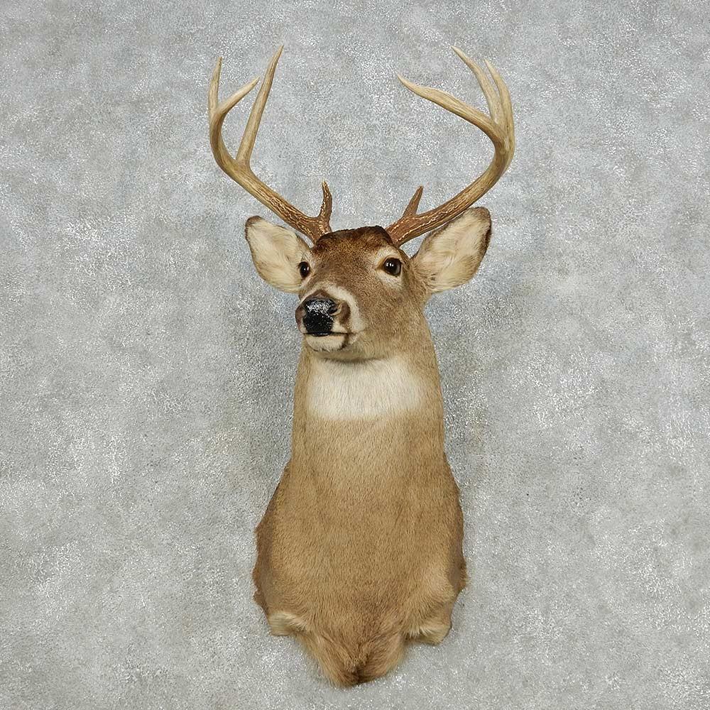Whitetail Deer Shoulder Mount For Sale 14119 The