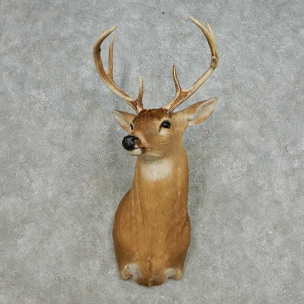 Whitetail Deer Shoulder Mount For Sale 14123 The
