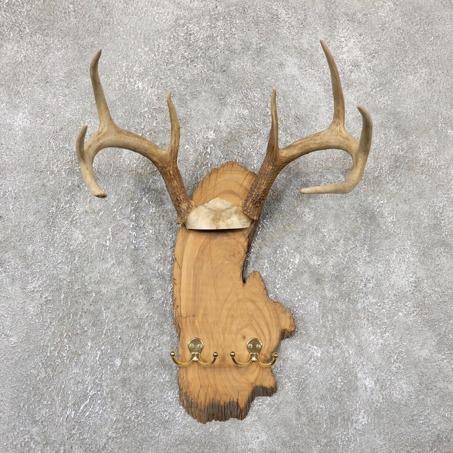Whitetail Deer Antler Plaque Mount For Sale #19331 @ The