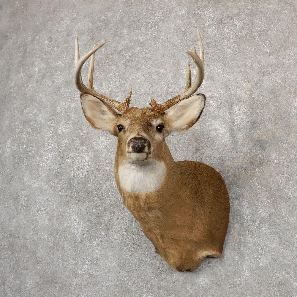 Whitetail Deer Shoulder Mount For Sale #18850