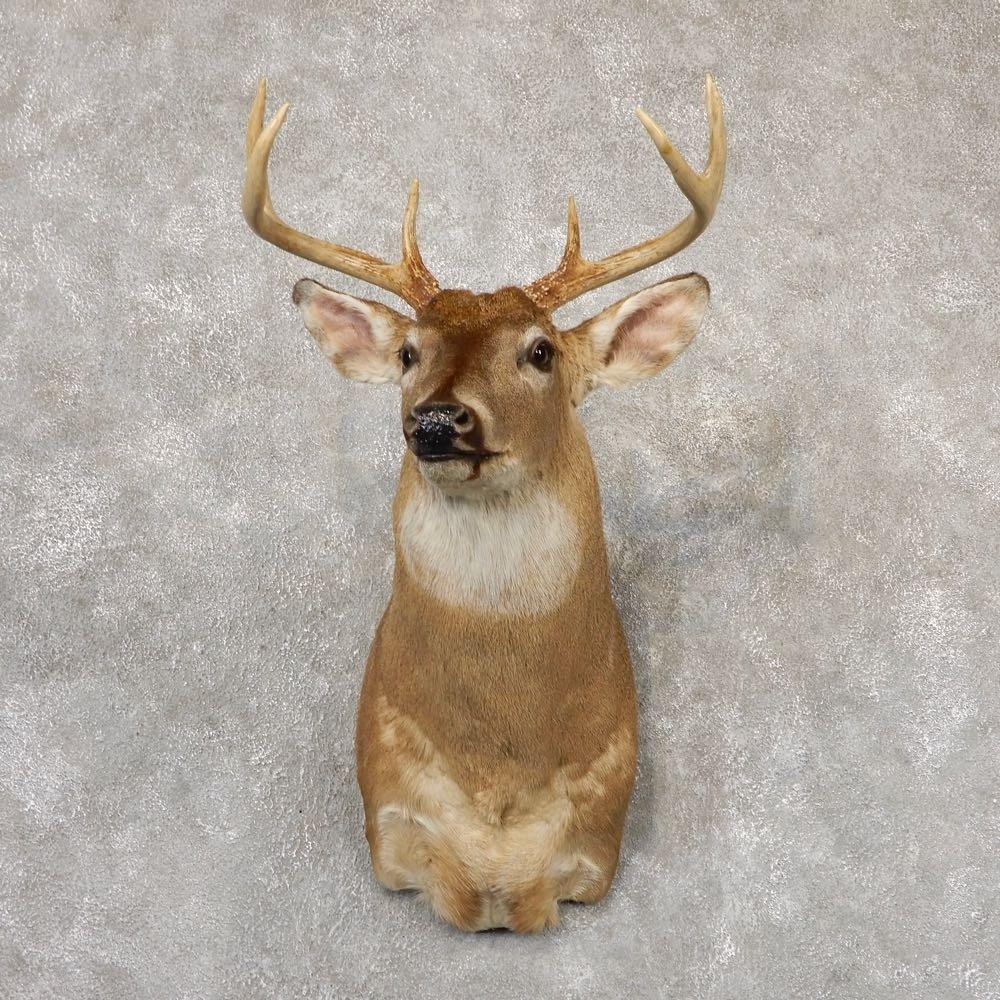 Whitetail Deer Shoulder Mount For Sale #18859