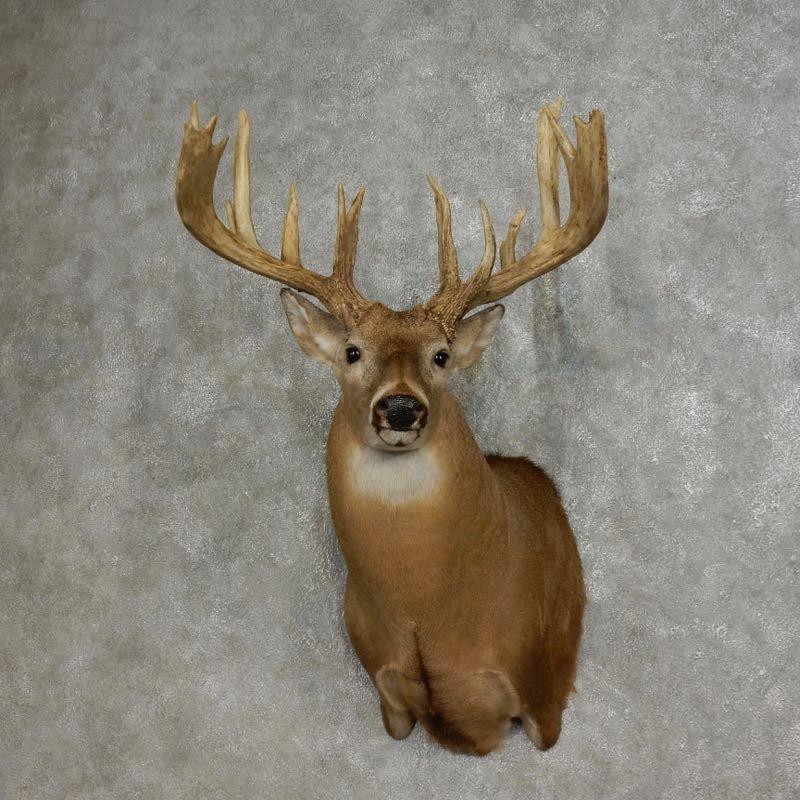 Whitetail Deer Shoulder Mount For Sale 17867 The