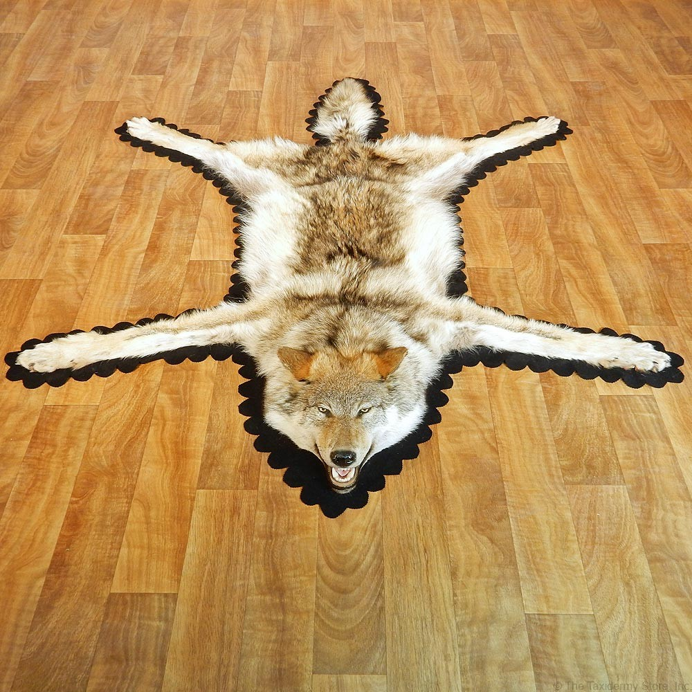 Gray Wolf Taxidermy Rug #13008