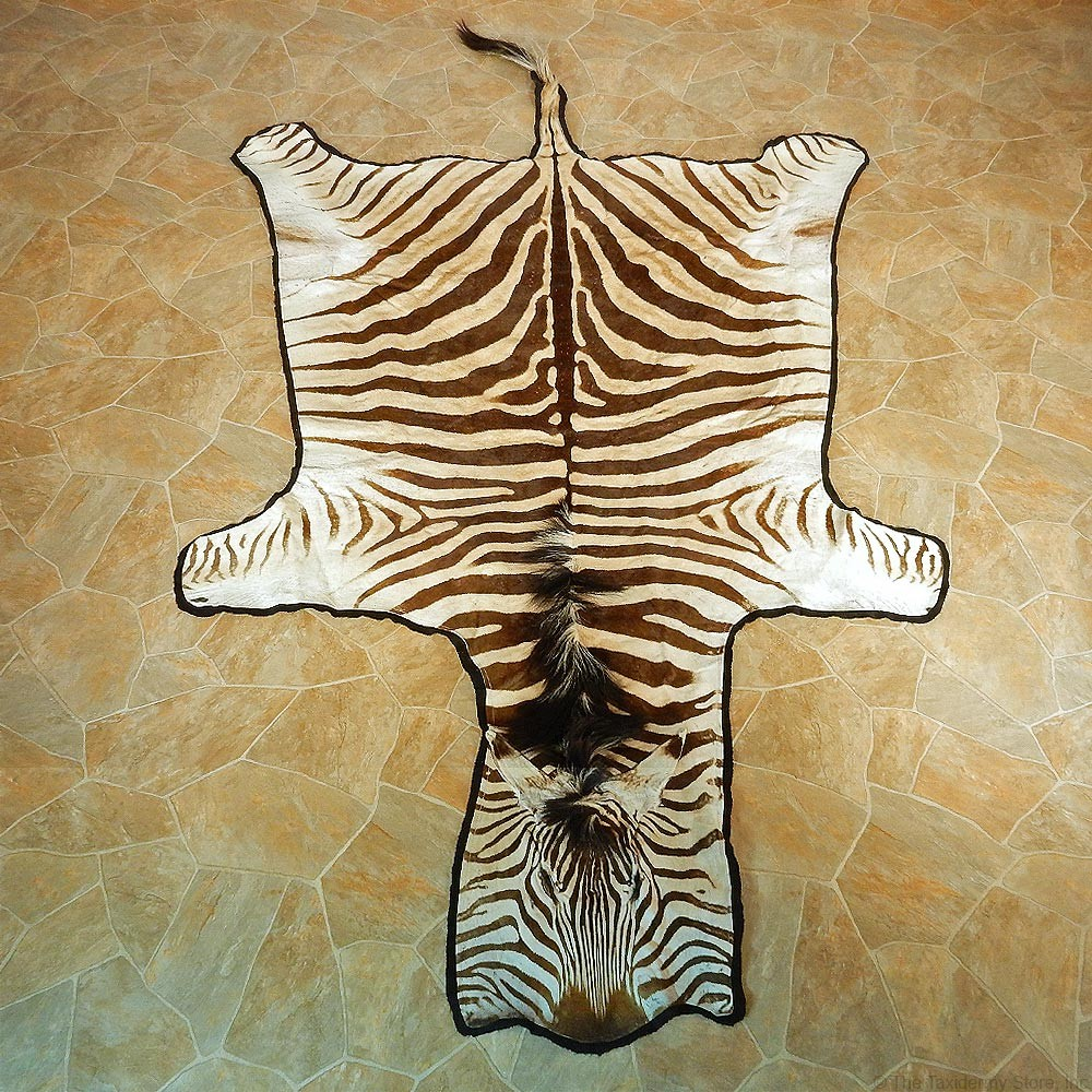 Zebra Taxidermy Rug #13012