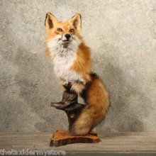 Red Fox Pedestal Mount