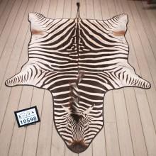 African Burchell's Zebra Rug