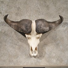 African Cape Buffalo Skull #10696 - The Taxidermy Store