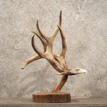 Eagle Carving on Whitetail Antler