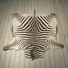Zebra Rug Mount #10953 - The Taxidermy Store