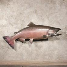 Red Chinook King Salmon