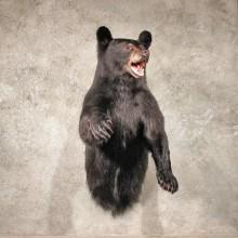 Black Bear w/ Open Mouth