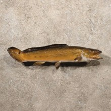 Bowfin Dogfish Taxidermy Fish Mount For Sale