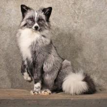 Standing Whitemark Silver Fox