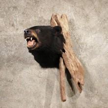 Black Bear Head on Branch