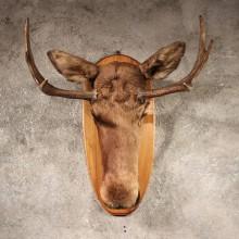 Moose Head on Plaque