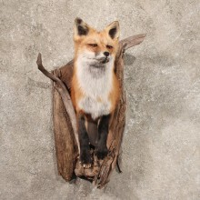 Wall Hanging Red Fox