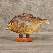 Red Bellied Piranha Fish Mount #11340 - The Taxidermy Store