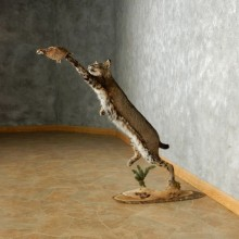 Leaping / Jumping Bobcat Taxidermy Mount #12677 For Sale @ The Taxidermy Store