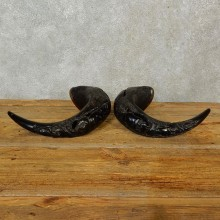 Carved Cape Buffalo Horns For Sale #16553 @ The Taxidermy Store