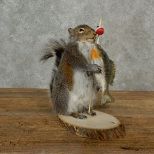 Fishing Squirrel Novelty Taxidermy Mount For Sale