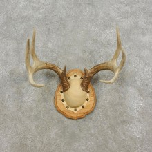 Whitetail Deer Antler Plaque Mount For Sale #17295 @ The Taxidermy Store