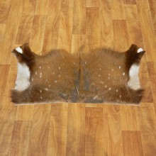 Bushbuck Taxidermy Hide Rug For Sale #17451 @ The Taxidermy Store