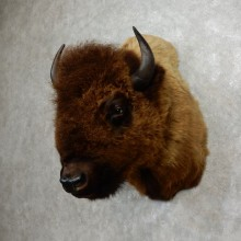 American Bison Shoulder Mount For Sale #17765 @ The Taxidermy Store