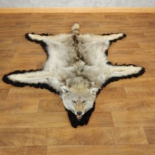 Coyote Full Rug Taxidermy Mount For Sale