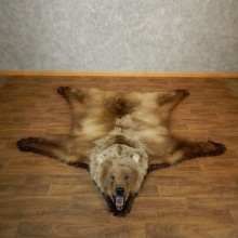 Grizzly Bear Taxidermy Rug Mount For Sale #18209 @ The Taxidermy Store