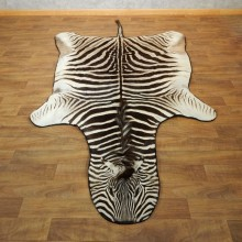 African Zebra Full-Size Taxidermy Rug For Sale