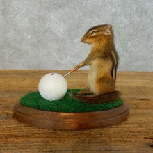 Golfing Chipmunk Novelty Taxidermy Mount For Sale