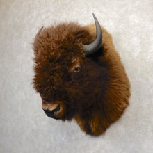 American Buffalo Shoulder Taxidermy Mount For Sale #20338 @ The Taxidermy Store