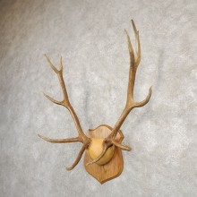 Rocky Mountain Elk Plaque Mount For Sale #20669 @ The Taxidermy Store