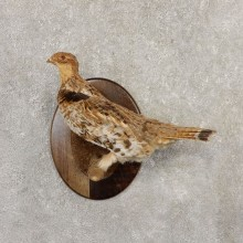 Ruffed Grouse Bird Mount For Sale #20803 @ The Taxidermy Store