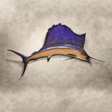 Sailfish Replica Taxidermy Fish Mount For Sale