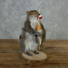 Fishing Squirrel Novelty Mount For Sale #17129 @ The Taxidermy Store