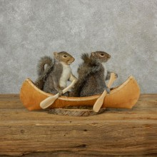 Two Novelty Canoe Grey Squirrels 17102 @The Taxidermy Store