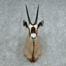 African Gemsbok Shoulder Mount