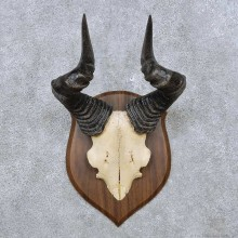 Hartebeest Horn Plaque Mount For Sale #14505 @ The Taxidermy Store
