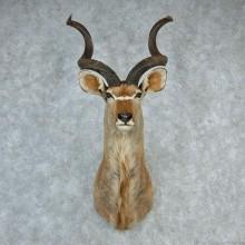 Greater Kudu Shoulder Mount