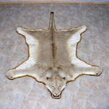African Lion Rug