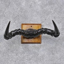African Topi Taxidermy Horn Plaque Mount #12452 For Sale @ The Taxidermy Store