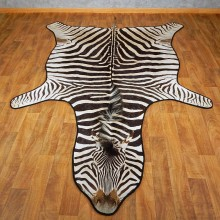 African Zebra Taxidermy Rug Mount For Sale