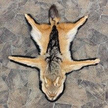 Black-backed Jackal Full-Size Taxidermy Rug For Sale