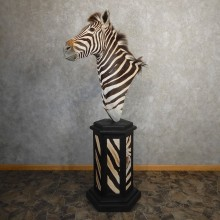 African Burchell's Zebra Pedestal Mount For Sale #21190 @ The Taxidermy Store