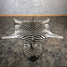 African Zebra Full-Size Taxidermy Rug For Sale #20087 @ The Taxidermy Store