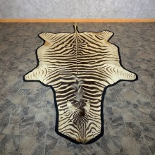 African Zebra Full-Size Taxidermy Rug For Sale #22544 @ The Taxidermy Store